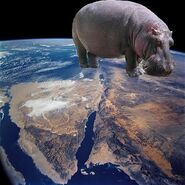 THAT IS ONE FAT HIPPO!!!!!!!!!!!!!!!!!!!!!!!!!!!!!!!!!!!!!!!!!!!!!!!!!!!!!!!!!!!!!!!!!!!!!!!!!!!!!!!!!!!!!!!!!!!!!!!!!!!!!!!!!!!!!!!!!!!!!!!!!!!!!!!!!!!!!!!!!!!!!!!!!!!!!!!!!!!!!!!!!!!!!!!