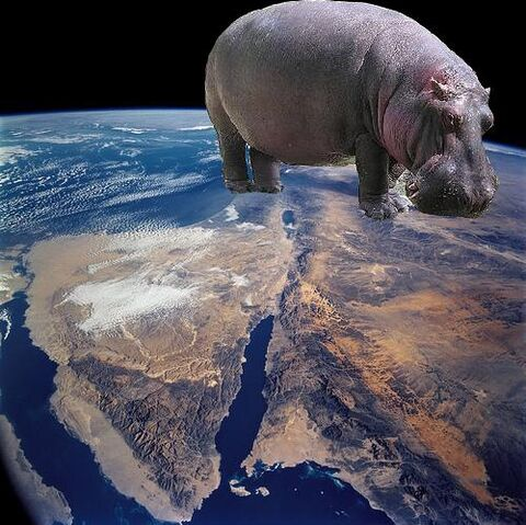 File:THAT IS ONE FAT HIPPO!!!!!!!!!!!!!!!!!!!!!!!!!!!!!!!!!!!!!!!!!!!!!!!!!!!!!!!!!!!!!!!!!!!!!!!!!!!!!!!!!!!!!!!!!!!!!!!!!!!!!!!!!!!!!!!!!!!!!!!!!!!!!!!!!!!!!!!!!!!!!!!!!!!!!!!!!!!!!!!!!!!!!!! .jpg