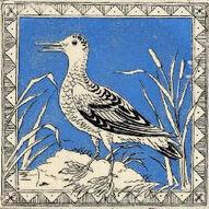 Bird 4b