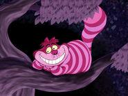 Cheshire-cattree