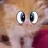 File:Kittengee.jpg