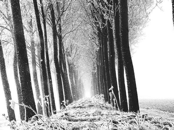 File:WinterCourt.jpg