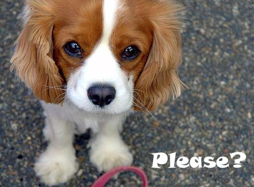 File:Puppy eyes-2.jpg