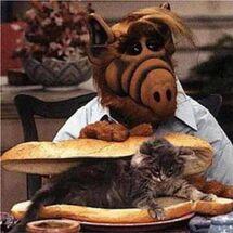 Alf cat