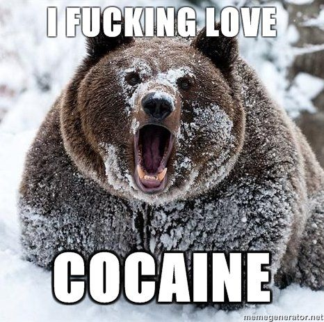 File:Bear-fucking-loves-cocaine.jpg