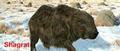 Thumbnail for version as of 14:55, September 11, 2011
