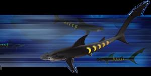 Sharkopath2
