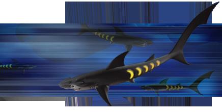 File:Sharkopath2.png