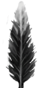File:Feather.png