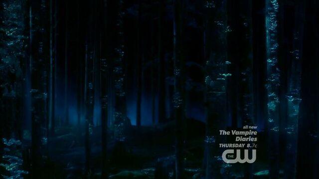 File:Bioluminescent-Forest-Pilot.jpg