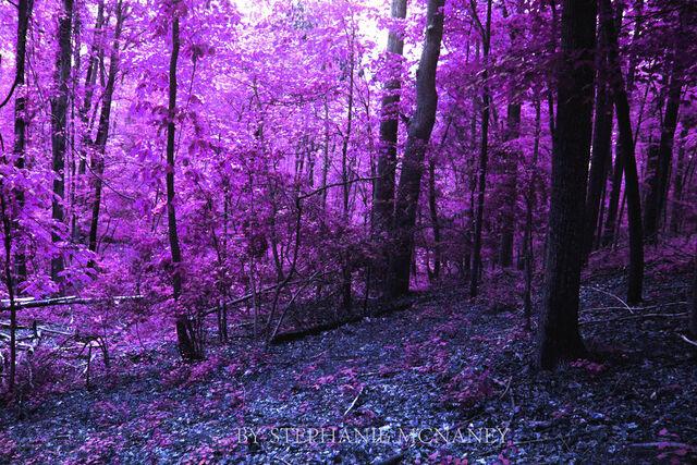 File:Purple fore.jpg