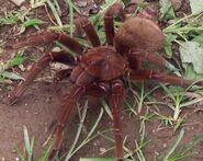 Spider mutt