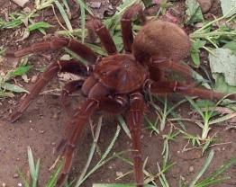File:Spider mutt.jpg
