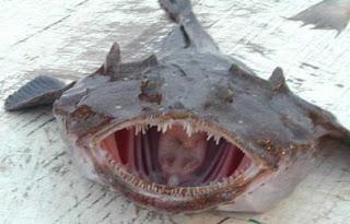 File:Monkfish.jpg