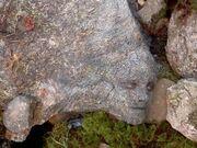 Peeta Camouflaged