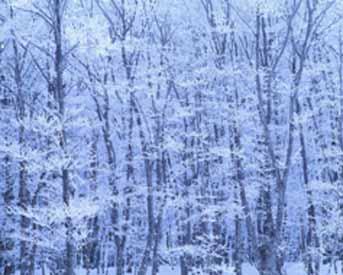 File:Winter1.jpg