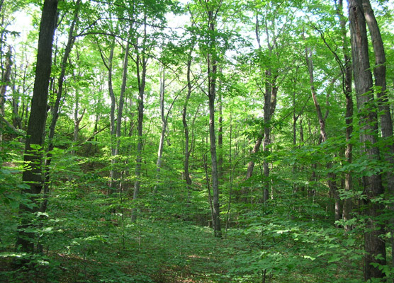 File:Forests.jpg