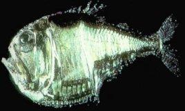 File:Creepy fish.jpg