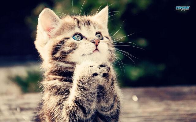 File:Kitten-16219-1280x800.jpg