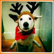 File:AVAN'S DOG!!!!!!.jpg