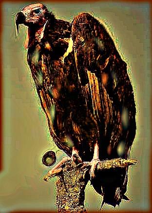 File:Muttation vulture.jpg