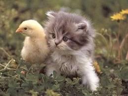 File:Cuteh Kitteh.jpg