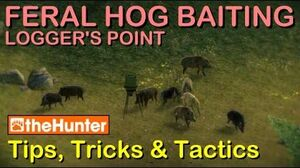 TheHunter Tips, Tricks & Tactics - FERAL HOG BAITING