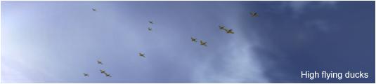 Duck flock approaching