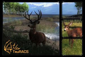 Species blacktail deer 700