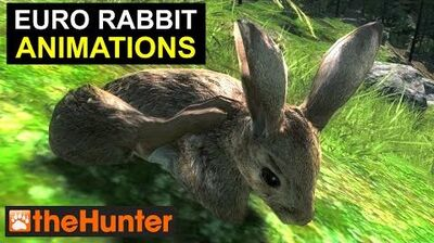 TheHunter European Rabbit Animations