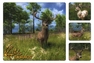 Species whitetail deer 700