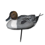 Northern pintail decoy male