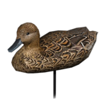 Northern pintail decoy female