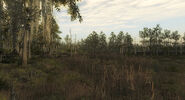 Swamp reserve 04