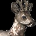 Roe deer male piebald