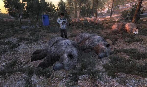 Epona142 two rare brown bear