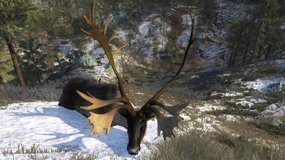 Trophy reindeer