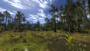 Duck decoys 1