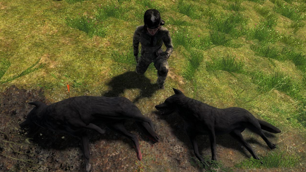 Coolfirell two melanistic coyotes