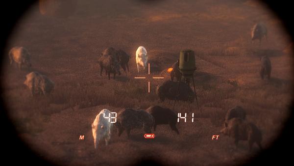 Dsl two albino wild boars