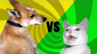 Cat vs Dog Epic Tail Chaser