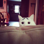 Insagram cat 8