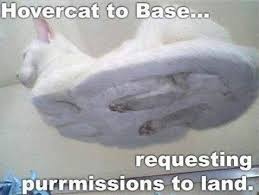 File:Meme hover cat.jpg