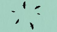 S2E08B Birds