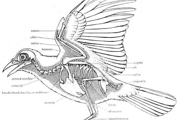File:Bird1.png