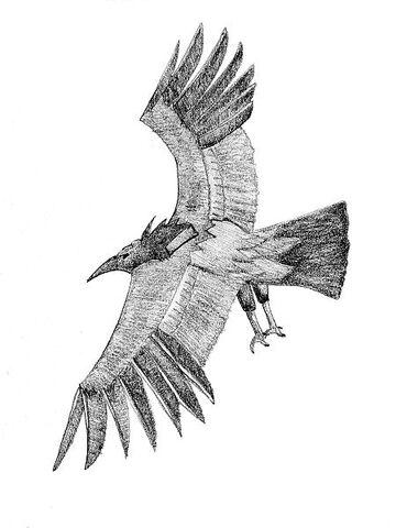File:Moth246.jpg