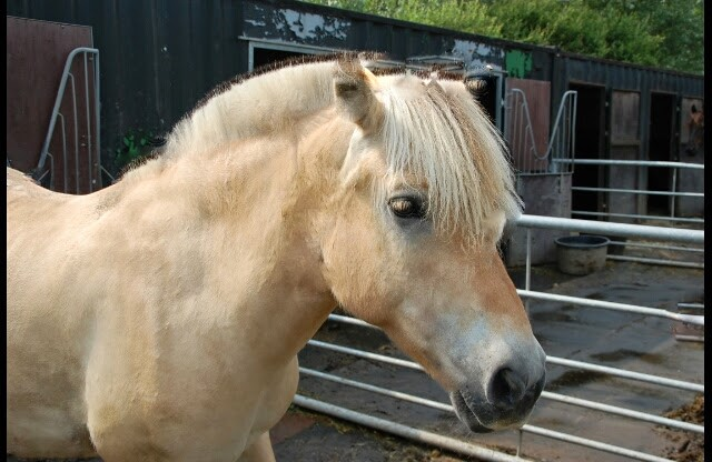File:Alwin -old lessonpony-.jpg