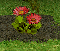File:Old Kings Folly Flower.png