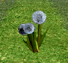 File:Wish Thistle Flower.png
