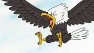 S6E25.055 Bald Eagle